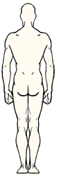 Example screenshot showing the posterior view of the simple body area diagram